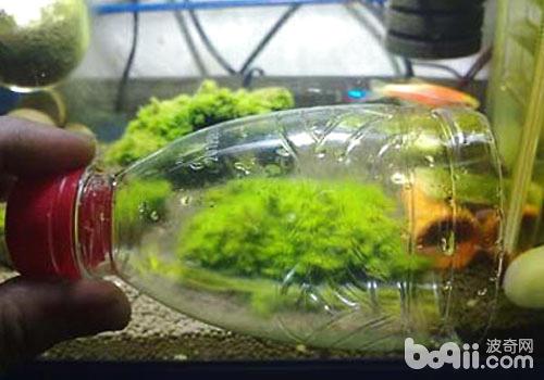 教你自制鱼缸的溶氧器