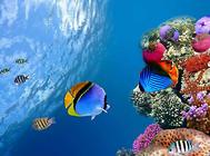 观赏鱼饲料中需要的营养