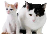 浅谈猫咪美容保健的几大要点
