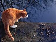 猫咪免疫接种后的不良反应及应对措施