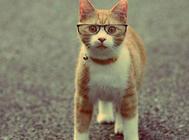 引起猫咪眼睛变红的原因