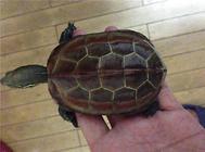 养龟要了解龟的习性