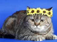 猫咪临床用药的注意事项