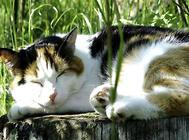 猫咪常见动作表情的解析(一)
