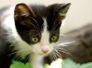 猫咪常见动作表情的解析(二)
