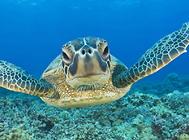 适宜乌龟的一些植物性饲料