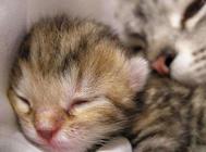 引起猫咪死亡的十大原因(一)