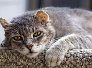 引起猫咪死亡的十大原因(二)