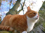 浅谈猫咪的昆虫过敏(二)