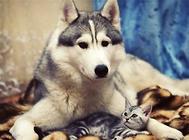 如何分辨狗狗是感冒还是传染病
