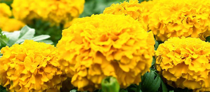 盆栽花卉8月的养护管理