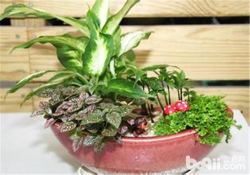 组合盆栽的设计要点及原理介绍 观花植物栽培-波奇网