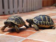 种龟产卵期间应注意的问题