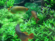 在水草缸中添加鱼类的注意事项