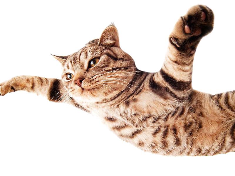 猫产后低血钙症的症状及治疗措施