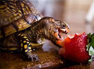 小乌龟也要养生