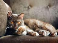 引起猫咪排便困难的多种原因(四)——饲养与管理