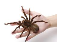 可以作为蜘蛛活体饲料的有哪些