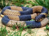 蛇的相关外伤处理