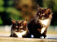 猫咪常见的日光照射性损伤
