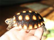 秋季养龟要注意的四个问题