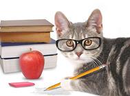 避免猫应激的方法