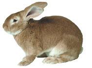野兔与家养兔有何区别