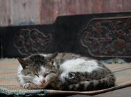 气味对猫咪行为的影响