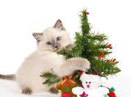 猫咪到底会不会眨眼睛?