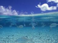 影响水族硝化过滤系统的因素