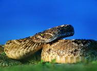 不同蛇种的食物选择