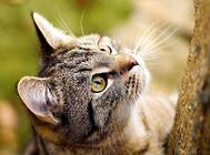 不要以毛取猫——浅谈猫咪的毛色