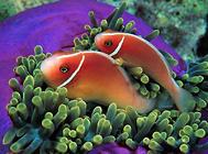 七彩神仙鱼为什么会倒立?