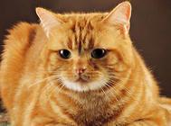关于猫咪营养与喂食的一些问题