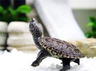 刚买回来的小龟应该吃什么?