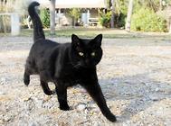 如何训练你的猫咪与众不同