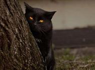 猫咪的视觉小知识