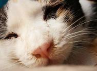 如何做到猫咪和人睡觉时不互相打扰