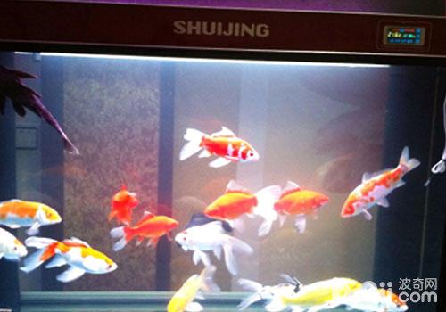 高效预防鱼病的方法