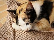 鱼油对猫咪的好处