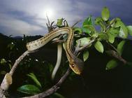 影响蛇开食的因素有哪些