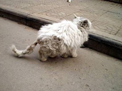猫感染性腹泻及诊疗