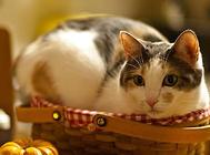猫咪认得回家的路吗?
