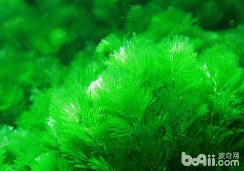 水草常见的损伤与病害