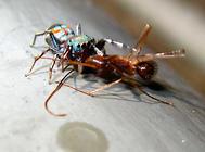 蜘蛛与蜈蚣有和异同点