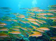 几种能对抗藻类的水草