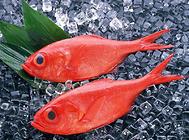 金鱼的表皮增生症