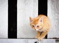 猫咪在手术之后的照顾及注意事项