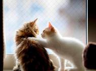 一些猫咪基本的训练方式