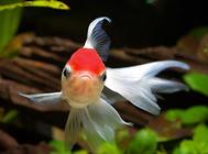 观赏鱼厌食拒食的原因及预防方法